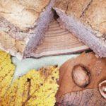 pain vegan sans gluten riz sarrasin