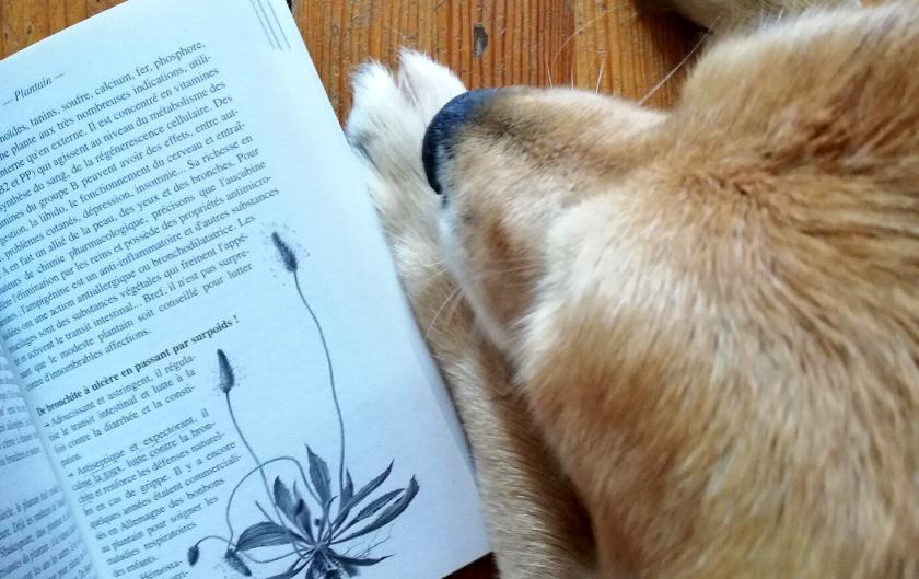 Pourquoi notre chien Enko mange du plantain ? [naturopathie animale]