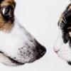 naturopathe animalier vétérinaire