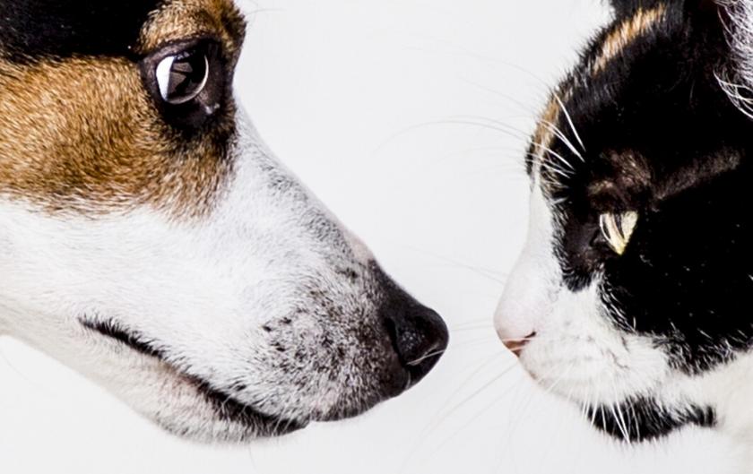 Naturopathe animalier et vétérinaire : quelles différences ?