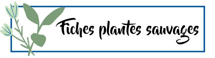 Fiches plantes sauvages