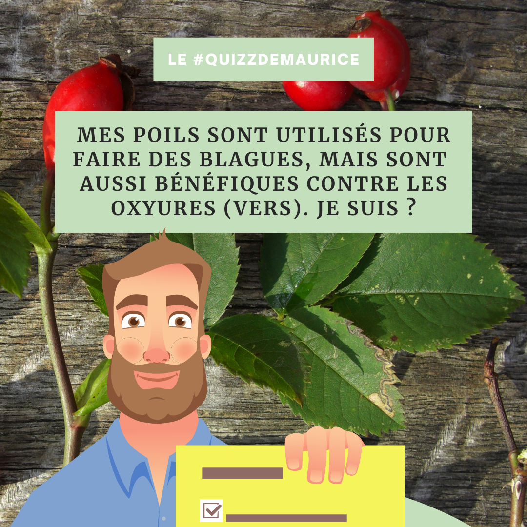 Quizz-de-Maurice-naturopathie-holsitique (2)