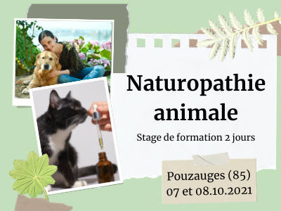 formation naturopathie animale chien chat